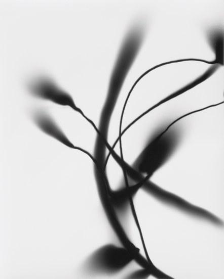Gustav Metzger, Rysunki świetlne, 2014, wydruk fotograficzny, unikat, dzięki uprzejmości Kettle's Yard
