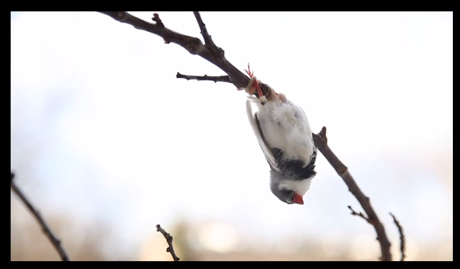 Kadr z wideo Ptak