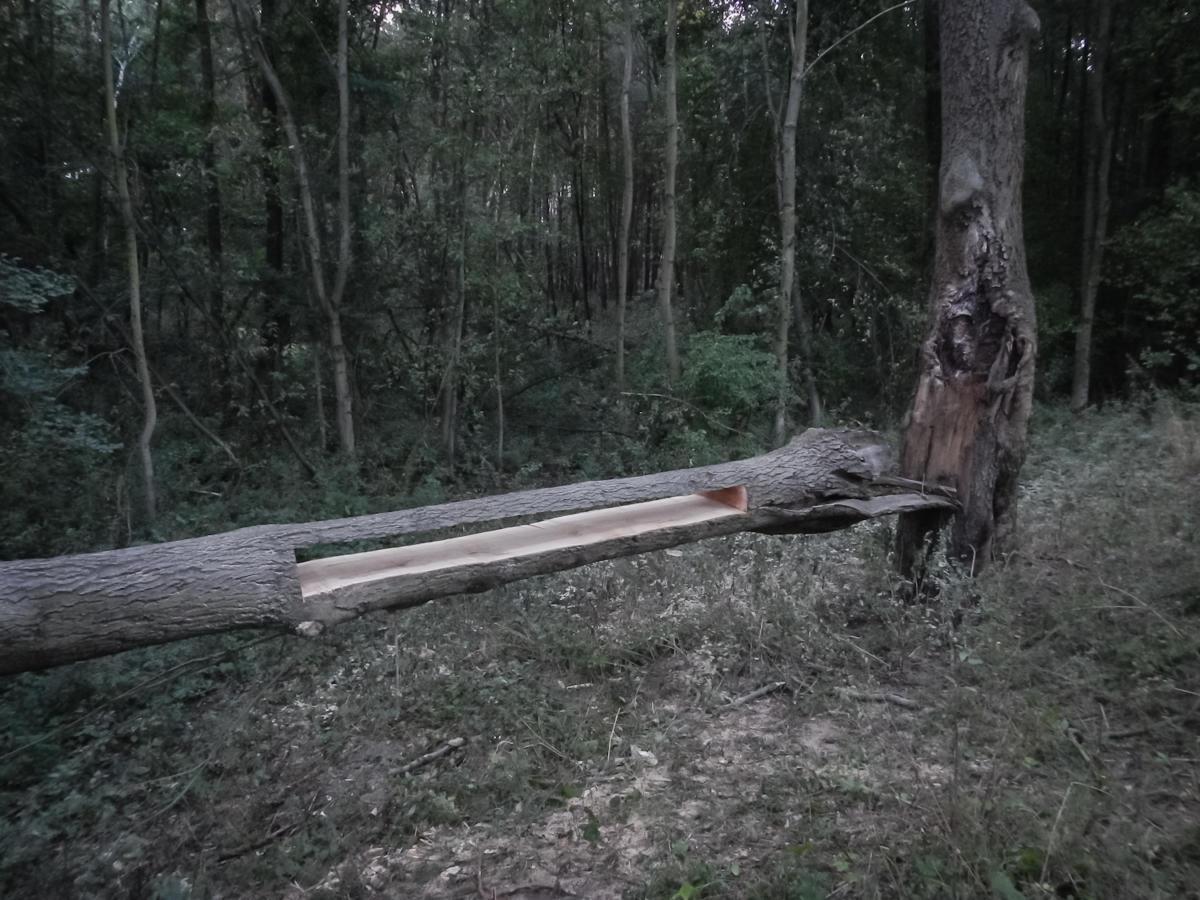 """""""Ashtreekling"""" Łukasza Gruszczyńskiego wWieży Ciśnień wKoninie"""