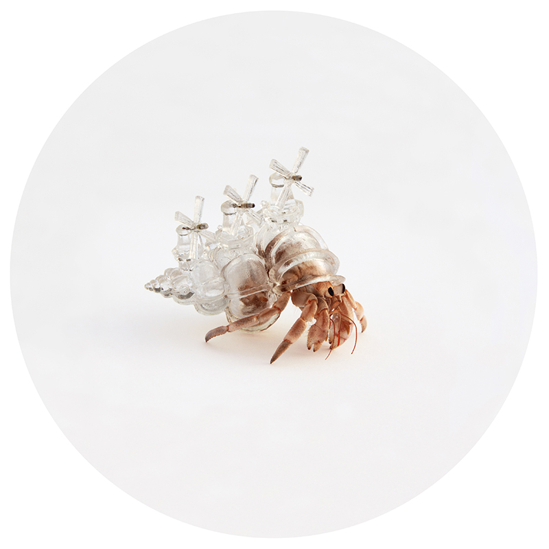 "Aki Inomata, Why Not Hand Over a ""Shelter"" to Hermit Crabs?, 2010-2016"