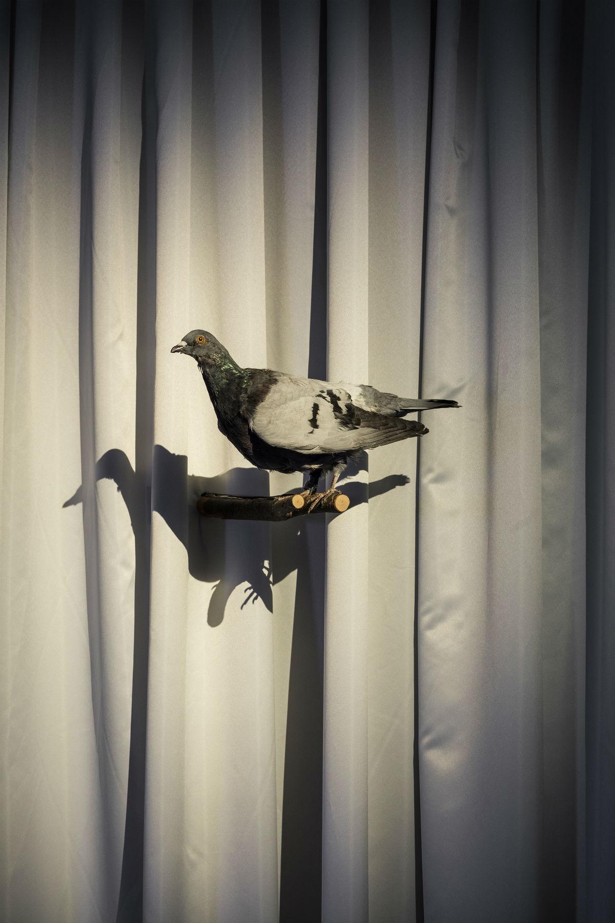 Amalia Ulman, PRIVILEGE, 2016, widok wystawy; 9th Berlin Biennale, fot.Timo Ohler