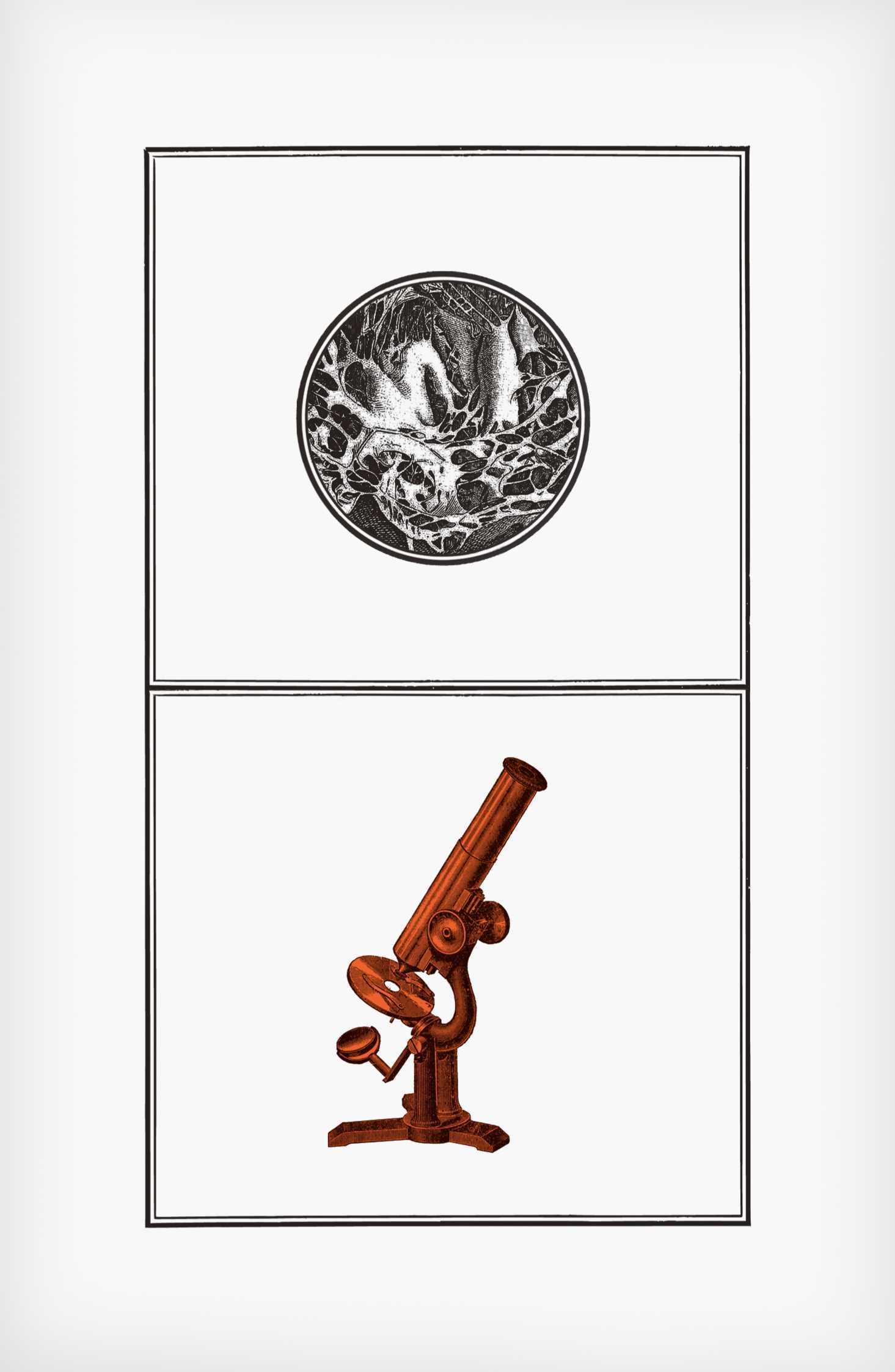 """""""Przeddmiot falliczny"""", ilustracja zksiążki """"Corpus Delicti"""" Jakuba Mikurdy iJakuba Woynarowskiego, grafika: Jakub Woynarowski"""