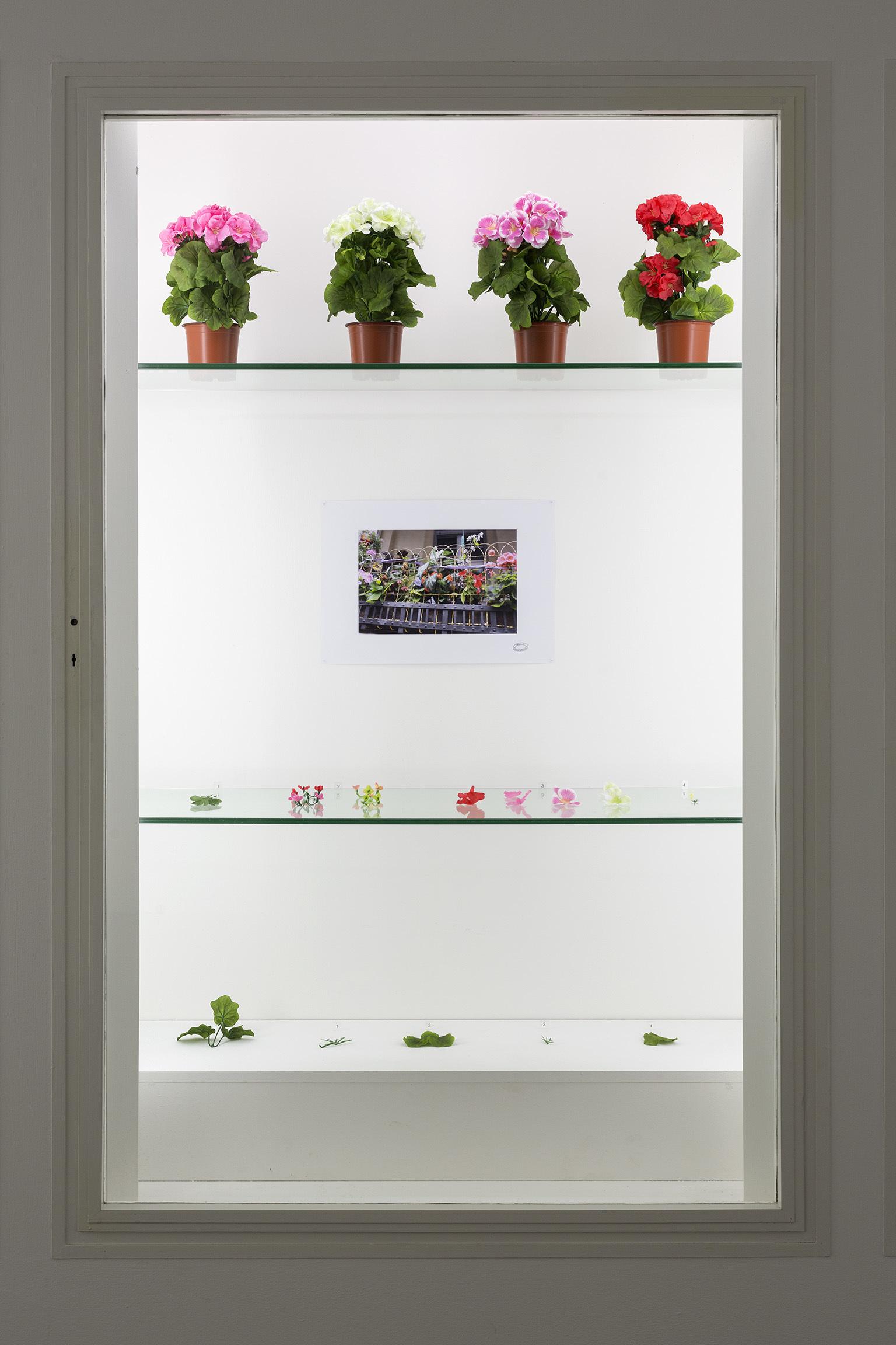 Alberto Baraya  Expedition Berlín, Herbarium of Artificial Plants,od 2013, dzieki uprzejmości artysty igalerii Nara Roesler, São Paulo, fot.Anders Sune Berg
