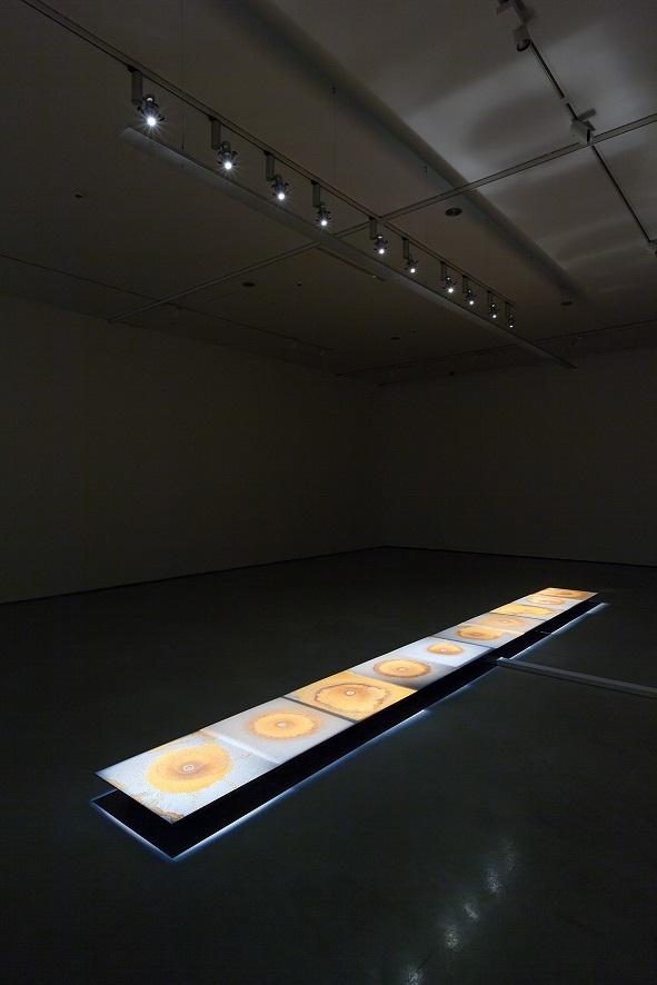 Teresa Margolles, Plancha, 2014, instalacja