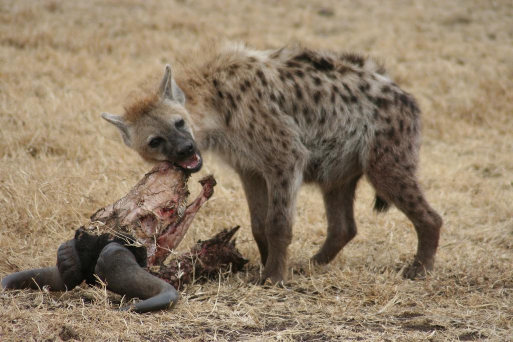 W Krakowie grasują hieny wernisażowe, ich łupem padają krakowskie osobistości