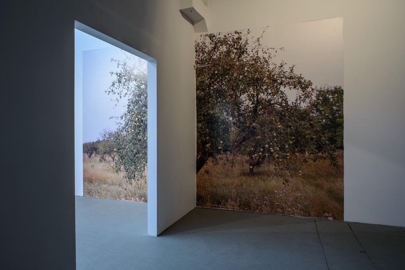 Lada Nakonechna, Drzewo owocowe, fotografia/druk cyfrowy, 2011/2014