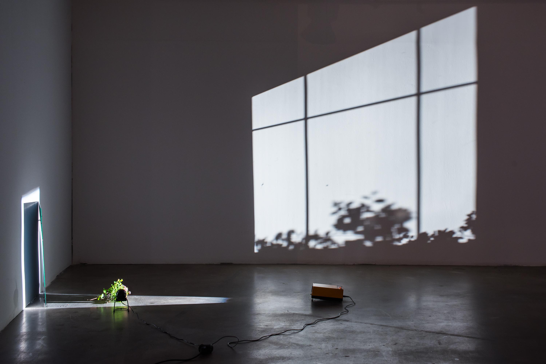 Ulrich Vogl, Okno, 2015, lustro, taśma klejąca, gałęzie, wentylator, źródło światła, zmienne wymiary, wł. artysty