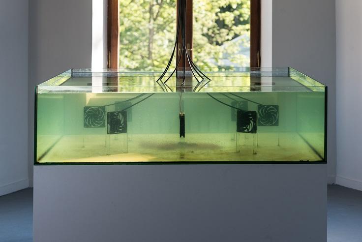 Piotr Bosacki, Kosmos, 2014, akwarium, woda, wiatraki elektryczne, dafnie