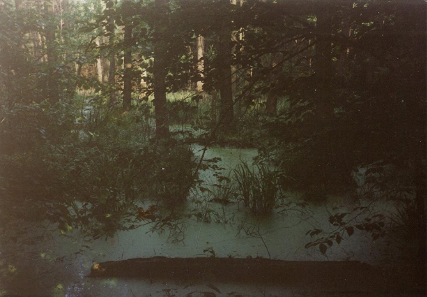 Gęstwina leśna; habazie, przezktóre przebijało się męskie nagie ciało