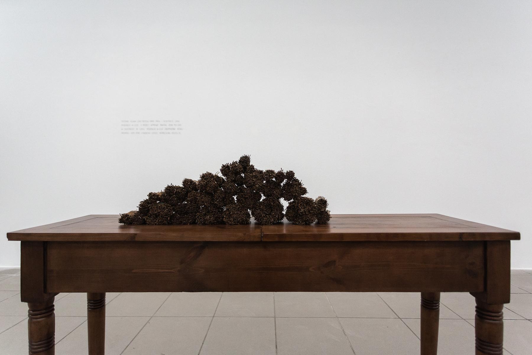 Paweł Szeibel, Pinus sylvestris, instalacja, 2015