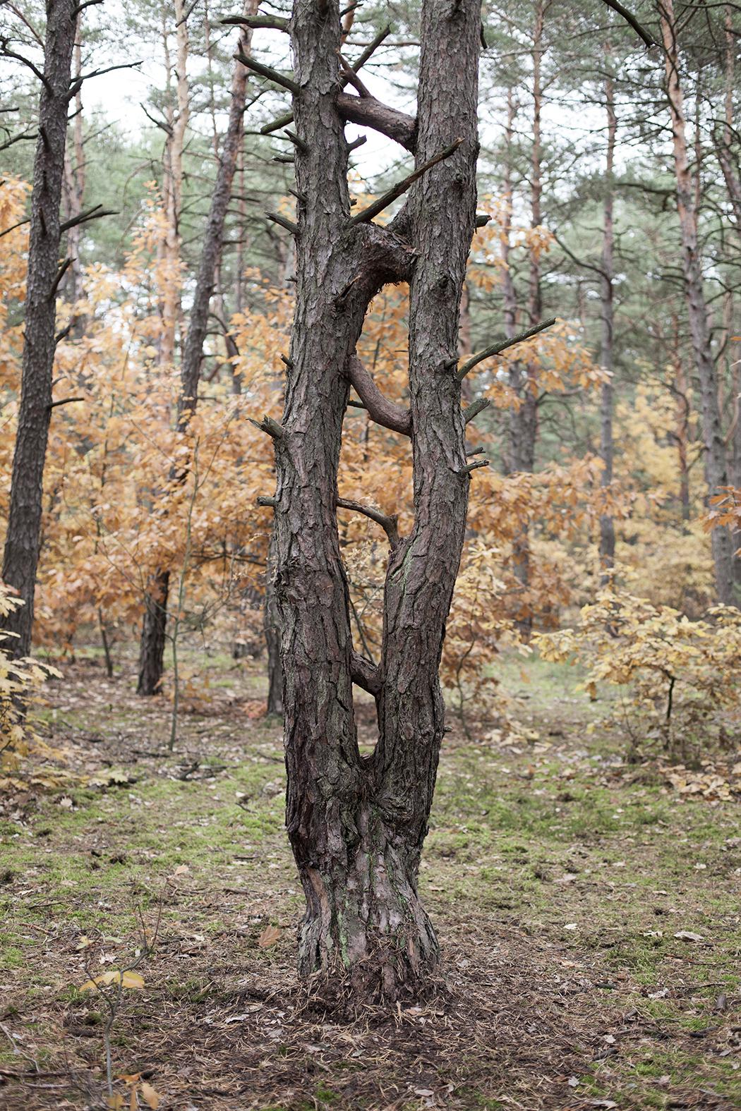"""Taus Makhacheva, Wymiar pionowy, 2015, dzięki uprzejmości Open Art Projects iartystki, praca zrealizowana wramach projektu """"Otwock"""" fot.Maciej Landsberg"""