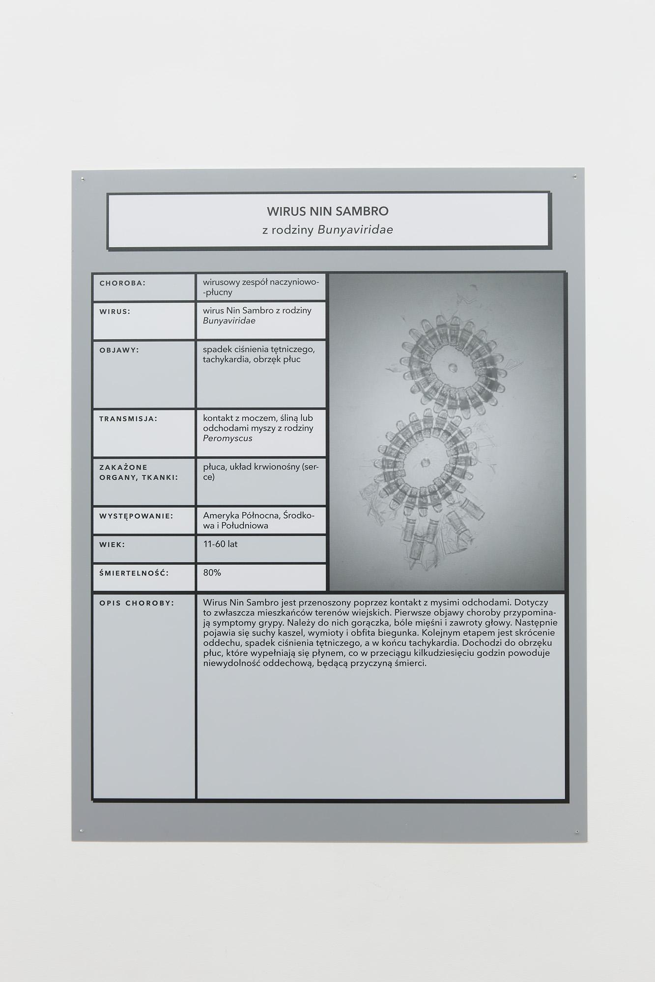 Wirus Nin Sambro, infografika, widok zwystawy, Galeria Piekary