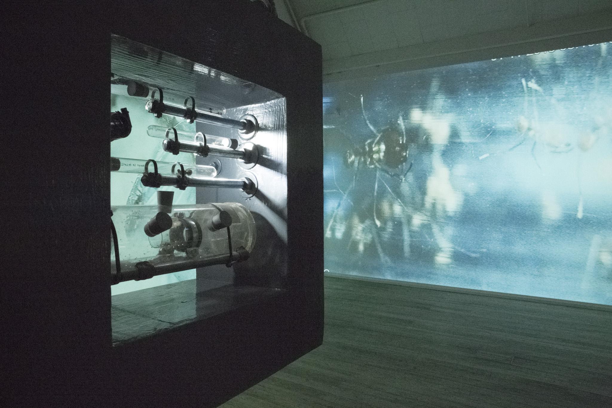 Symbiotyczność tworzenia, widok wystawy