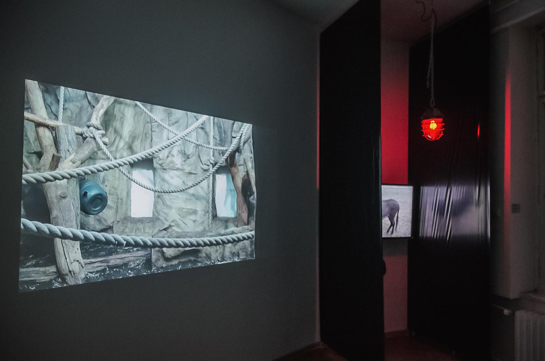 Psychoanimalja, widok wystawy