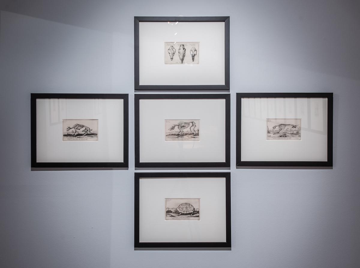 Tempus fugit. Oczasie iprzemijaniu, widok wystawy, fot.Paweł Mazur