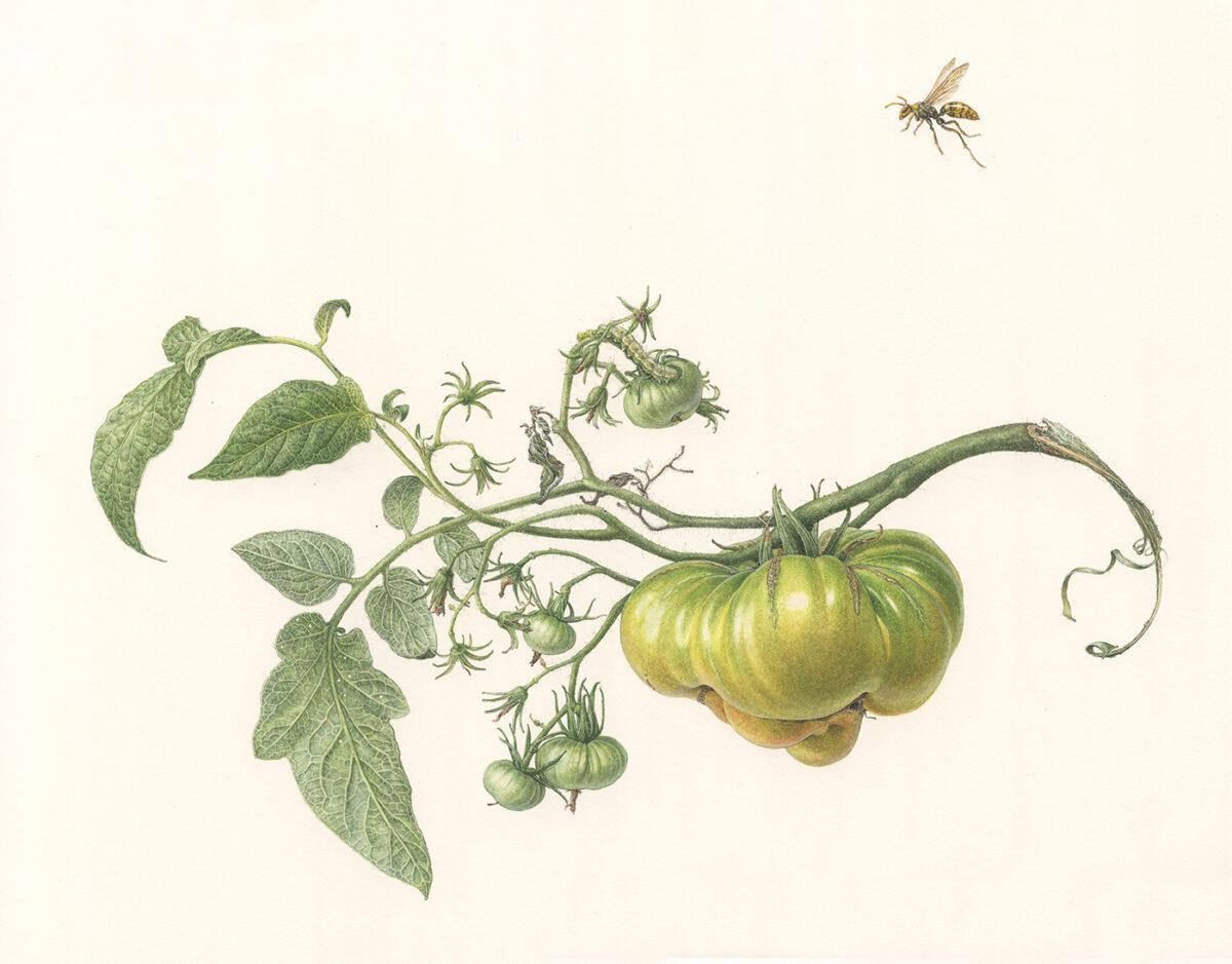 """""""Botaniczne poszukiwania. Sztuka botaniczna wXXI wieku"""" wMuzeum Manggha"""